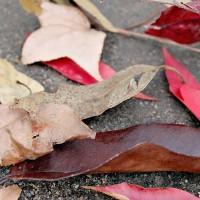 stof en kleurstalen
